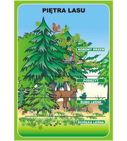 Las i ochrona środowiska